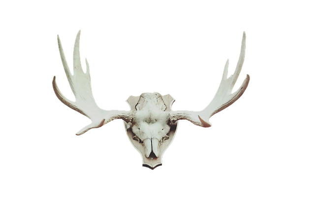 animal antlers